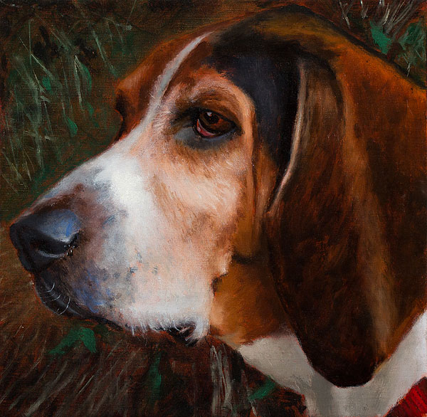 """Rufus in the Field"" by Tom Mason"